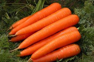 Полезность моркови: источник витаминов для здоровья детей и взрослых