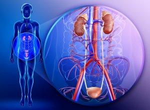 Заболевания мочеиспускательной системы