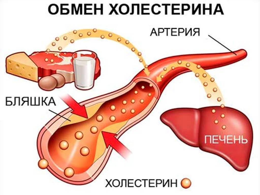 В каких продуктах много холестерина и может ли он навредить организму