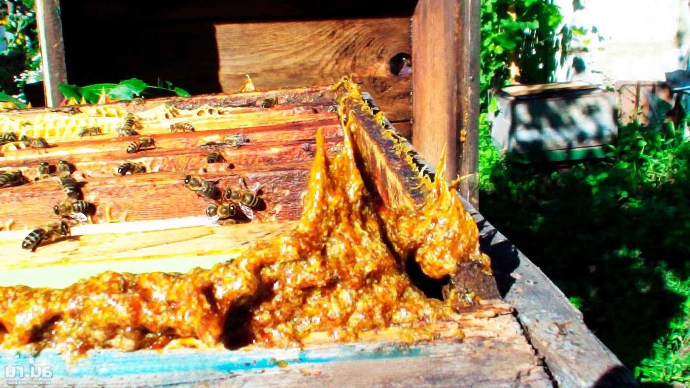 Пчелиная аптечка: как выглядит прополис