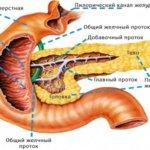 Процессы пищеварения