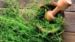 Какие травы помогают похудеть