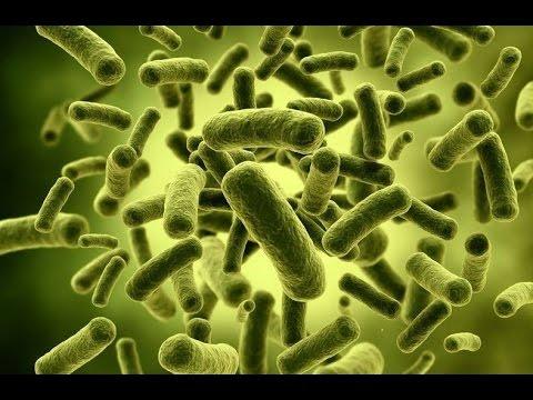 Молочнокислые бактерии: это что такое и в чем их польза
