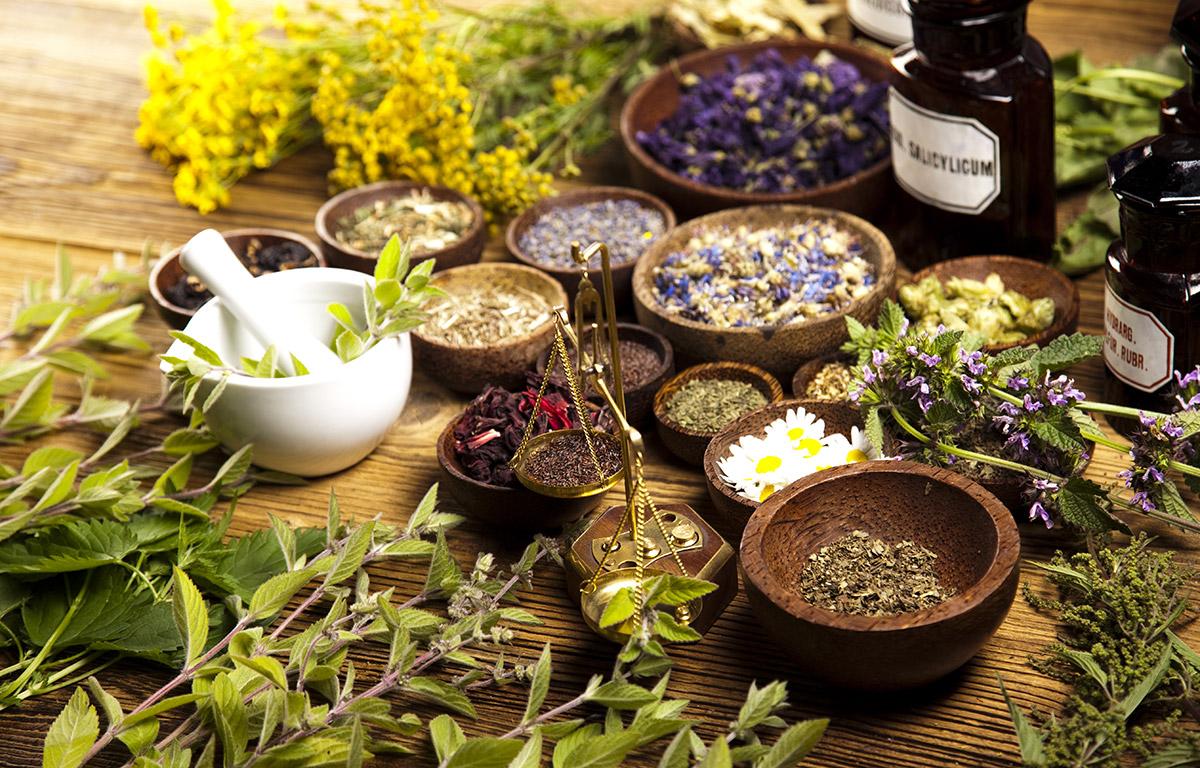 Какие травы помогают похудеть: все о растениях для похудения