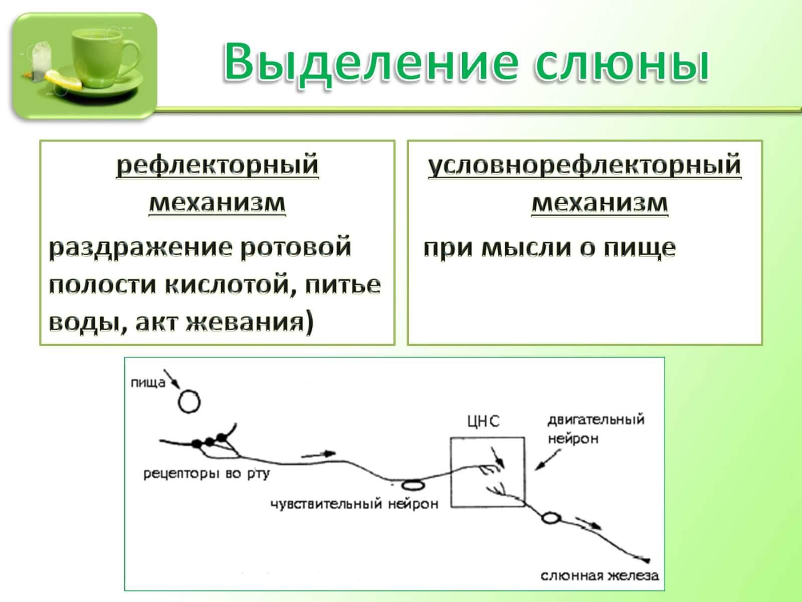 Состав слюны человека: нормальные показатели биологической жидкости