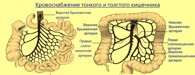 Кровоснабжение кишечника