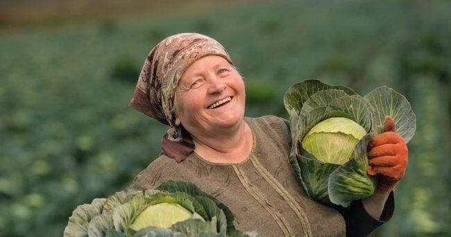 Бабушка с капустой